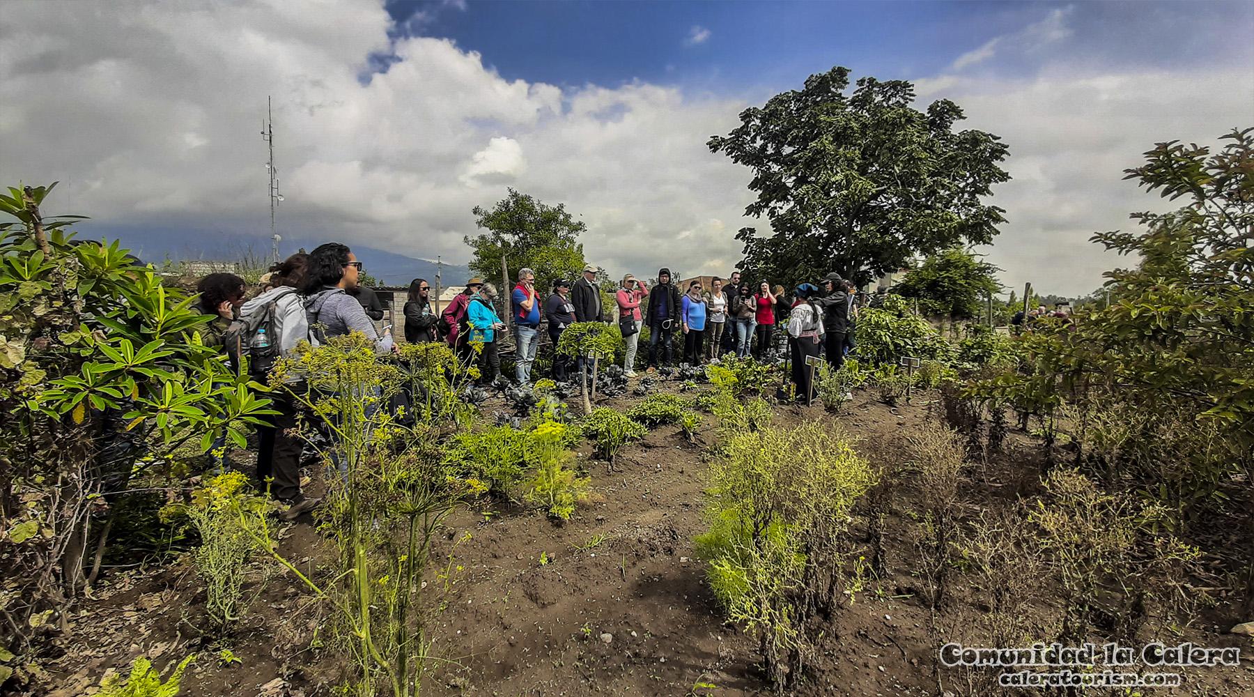 huerto orgánico comunidad calera cotacachi